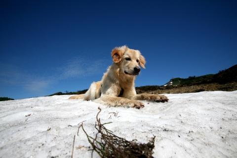 - (Skitour, Hund)