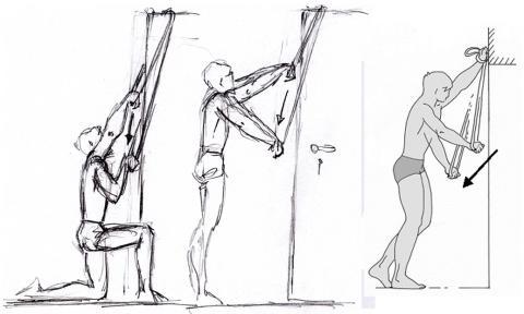 - (Muskelaufbau, latissimus)