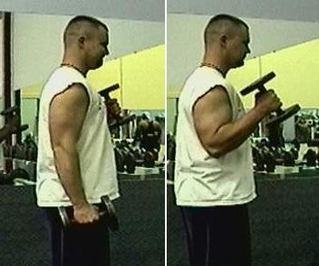 Hammercurls - (Krafttraining, Muskelaufbau, Fitness)