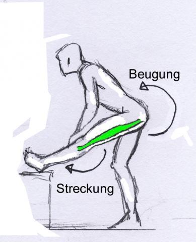 Bild 2 - (Übungen, Hamstring, Muskuläre Situation)