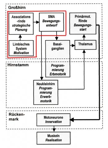 rot umrandet: bewusste Prozesse - (lernen, motorisches Lernen, Neuronen)