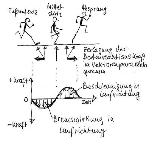 Kurve der Horizontalkraft beim Sprung - (Sport, Schule, Bewegungsablauf)
