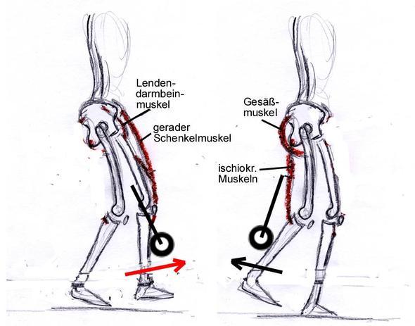 Bild 2: Training der sprintspezifischen Muskeln - (Krafttraining, Leichtathletik, Sprint)
