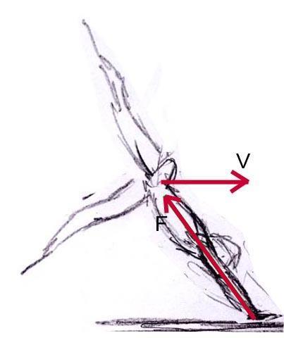 Stützphase beim Handstandüberschlage vorwärts - (Turnen, handstand, Abdruck)
