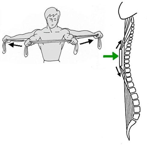 Bild 2 - (Krafttraining, Physiotherapie, Sportwissenschaft)