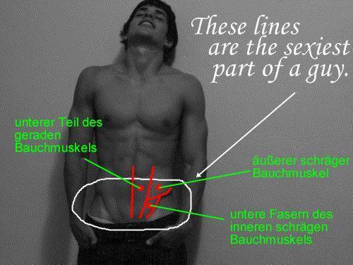 Bauchmuskeln - (Muskeln, Körper)
