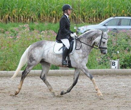 Vico und ich bei einem Dressur tunier - (reiten, Pferde, Anfänger)