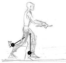 Bild 4 - (Muskelaufbau, Oberschenkel)