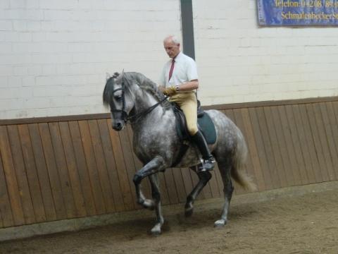 Bilduntertitel eingeben... - (reiten, Pferde, Stabilität)