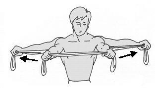 Abbildung 3 - (Training, Muskeln, Übungen)