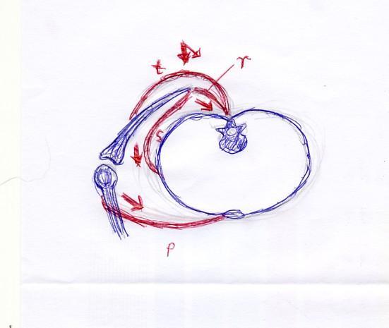Schulter (Ausschnitt) von oben - (Krafttraining, Rücken, Schulter)