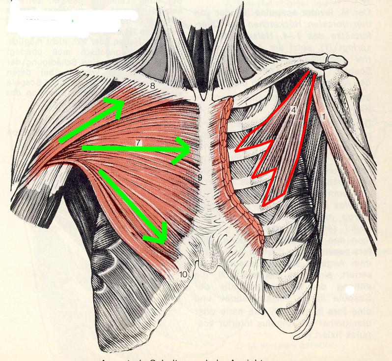 Brust Übungen / Workout für straffe Brust - 5 Min - Training für ...