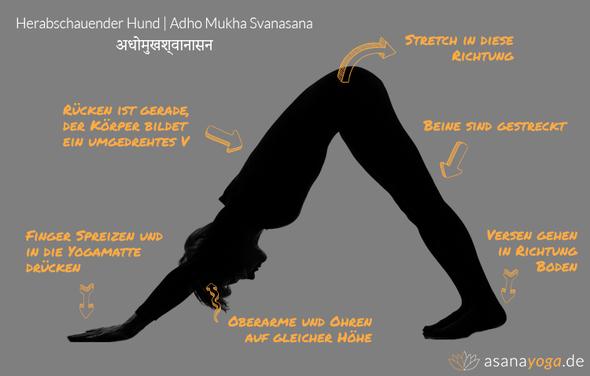 Herabschauender Hund Asana - (Yoga, Liegestütze, herabschauender Hund)