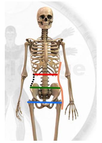 (verändert nach internet-Recherche) - (Gewicht, Körper, Taille)