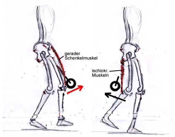 - (Muskelaufbau, Ausdauer, Knieprobleme)
