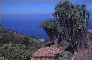 Wandern auf La Palma, Kanaren - (wandern, Bergwandern, Europa)