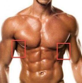 Latissimus von vorn - (Training, Rücken)