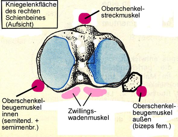 Bild 1 - (Krafttraining, Sport, Muskelaufbau)