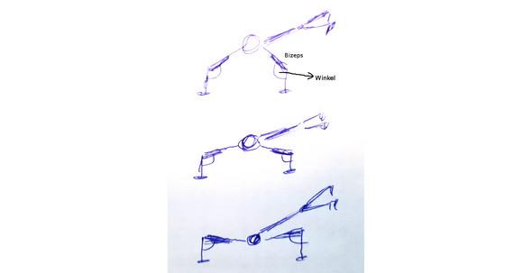 - (Muskeln, Muskeln aufbauen)