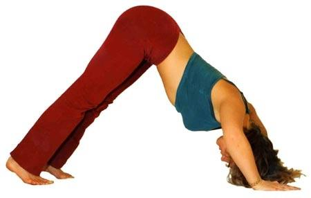 Yoga Hund stärkt Schultern und Arme - (Yoga, Liegestütze, Trainingssteigerung)