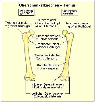 Lokalisation Trochanter major - (Fussball, Verletzung, Fußball Torwarthüfte)