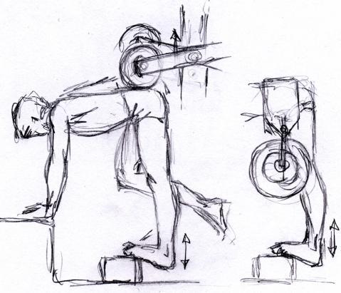 - (Krafttraining, Muskeln, Übungen)