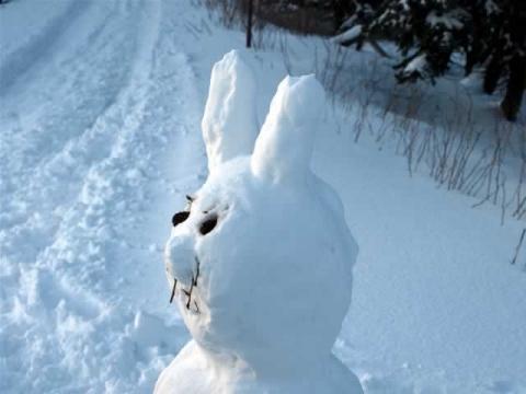 Bilduntertitel eingeben... - (Schnee, Schnee ist schneller, schneller Schnee)