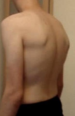 Bild 2 - (Training, Sport, Muskeln)