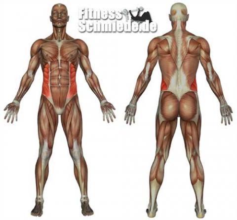 Musculus Obliquus externus abdomini-schräger Bauchmuskel-zu stark ...