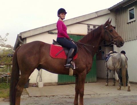 """""""Mein"""" Pferd und ich nach dem Springunterricht - (reiten, Pferde, Springreiten)"""