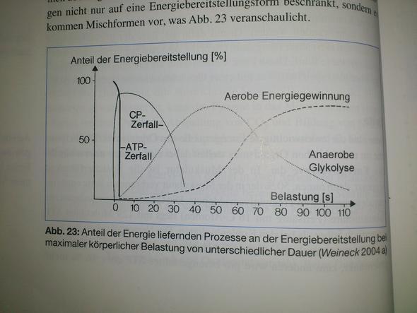 Bild 1 - Energiebereitstellungsprozesse - (Sport, Ausdauer, anaerob)