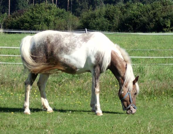 Pina :* - (reiten, Pony, reiterhof)