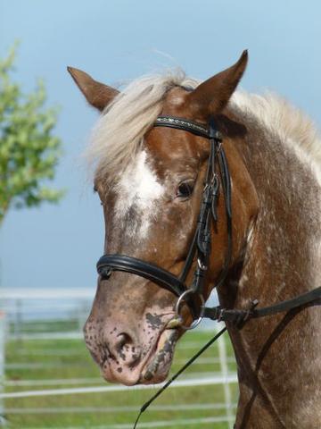 Pini <3 - (reiten, Pony, reiterhof)