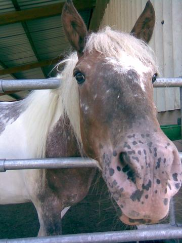Pinchen *-* - (reiten, Pony, reiterhof)